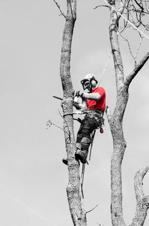 Arboriculture | Aménagement & Entretien Paysager | Dominique Filion