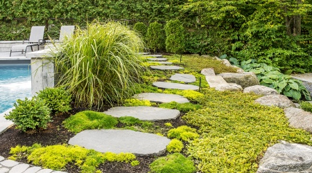 Stone path through the greenery